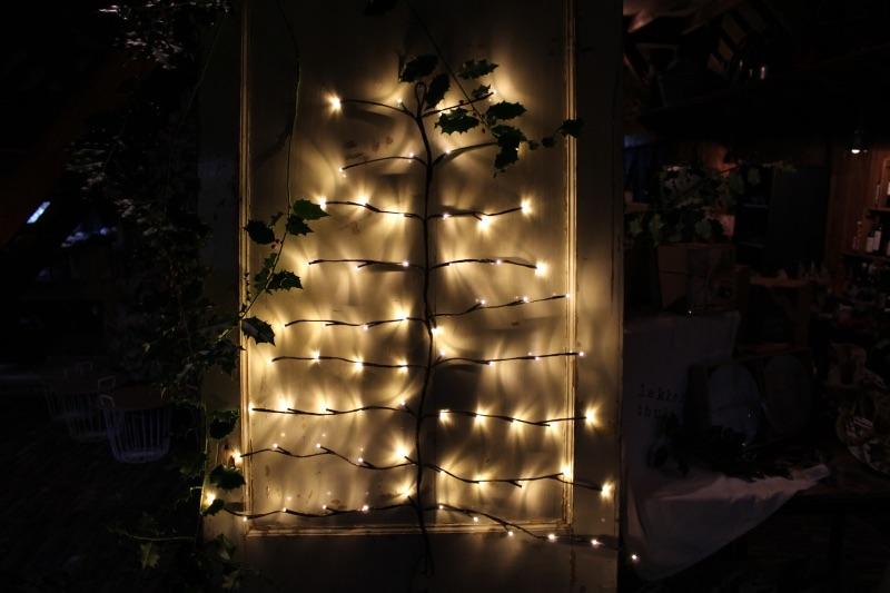 Eigen kerstboom beleving zelf laten groeien